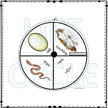 snake lifecycle